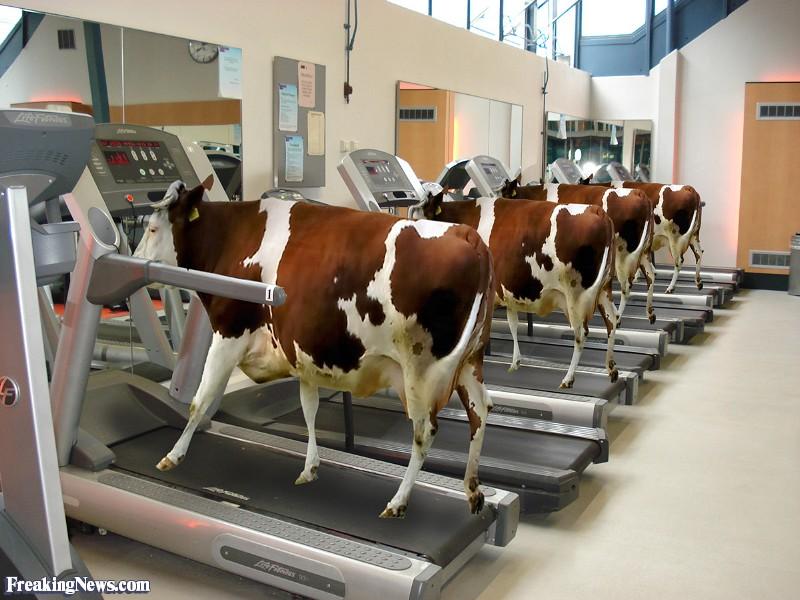 calf treadmills