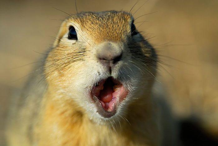 shocked chipmunk